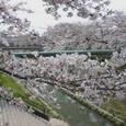 山崎川(名古屋市)の桜(2007年)