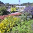 東山植物園(秋)