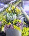 tokai-flower